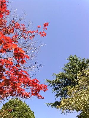 一点の曇りのない青空