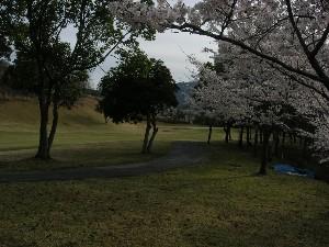 2012年粟賀ゴルフ倶楽部「桜の風景」(3)